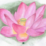 Lotus Flower Xbaby Dollx Traditional Art Paintings Landscapes