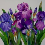Nel Everyday Painting Irises Watercolor Sold