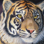 Nicola Wiehahn Art Portfolio Paintings Tiger Watercolour