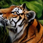 Oil Painting How Paint Animals Wildlife Art And More
