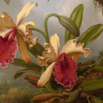 Orchid Painting Detail Flickr Sharing