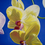 Orchid Paintings