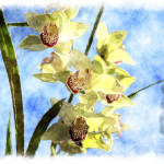 Orchid Watercolor Painting Digitally Converted
