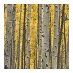 Painting Aspen Trees Parliament Goods