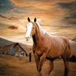 Paintings Originals For Sale Runaway Horse Original Oil Painting