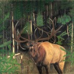 Pastel Drawing Bull Elk Prints