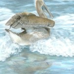 Pelican Surf Painting Carla Kurt Fine Art Prints And