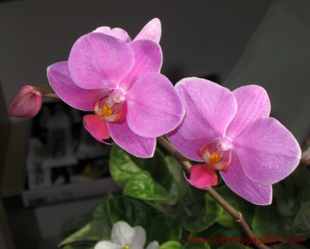 Pink Orchid Great Choice For Floral Workshop Even Artists Who