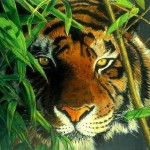 Realistic Tiger And Leopard Paintings Fine Art Blogger