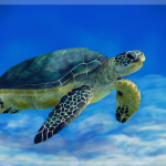 Related Searches For Sea Turtle Paintings