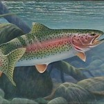 Results Trout Stamp Contest
