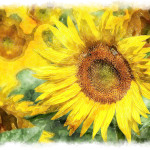 Rich Yellow Sunflower Scene Made Watercolors Field