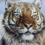 Siberian Tiger Paintings Close Painting Val Warner