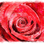 Stem Red Rose Macro Watercolor Painting