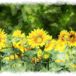 Sunflower Panting Made Watercolors High Resolution