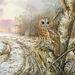 Tawny Owl Painting Carl Donner Fine Art Prints And