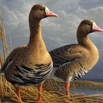The Fly Minnesota Artist Wins Duck Stamp Contest For Fourth Time