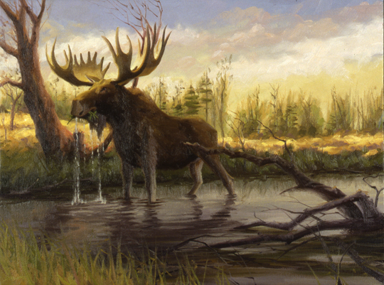 The Moose This Painting Was Attempt Recreate One Those Rare