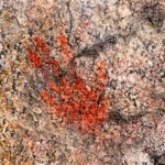 The Rock Paintings Which Are Believed Years Old From