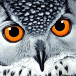 Thought Share The Owl Painting You Plus Handful Other