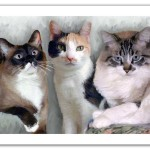 Three Cats Digital Oil Portrait Painting Canvas Artist