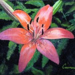 Tiger Lily Painting Phil Cusumano Fine Art Prints And