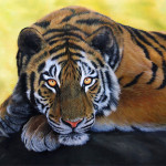 Tiger Paintings How Paint Animals Wildlife Art And More