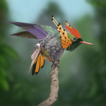 Tufted Coquette Hummingbird Digital Painting Rick Lilley