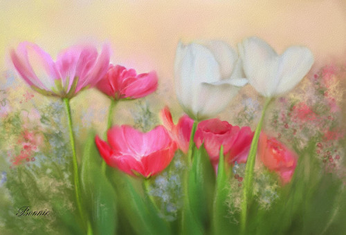 Tulip Garden Painting Bonnie Willis Fine Art Prints