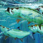 Two Tarpon Tournaments One Big Controversy Portraits From The Deep
