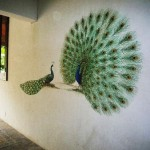 Wall Paintings Ideas