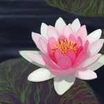 Water Lily Digital Painting And Pads Still