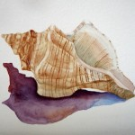 Watercolor Painting Conch Seashell Shell Art For Anything