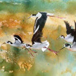 Watercolor Paintings Birds Famous Artists