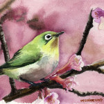 Watercolor Paintings Birds For Web Search