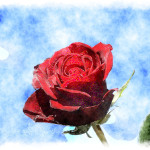 Watercolor Red Rose Painting Sky Blue High