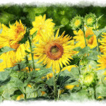 Watercolor Sunflower Painting