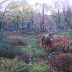 Whitetail Deer Painting Titled Autumn