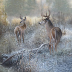 Whitetail Deer Painting Titled Morning Frost