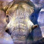 Wild Elephant Paintings Canvas Water Color Painting