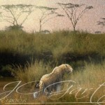 Wildlife Art Africa Selling Paintings Images Pictures
