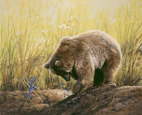 Wildlife Paintings Dan Rickards