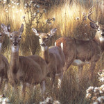 Wildlife Paintings Power And Grace Whitetail Deer Image Only