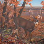 Wishful Thinking Whitetail Deer Reproduction Pat Pauley Wildlife Art