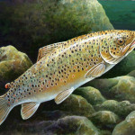 Year The Delaware Trout Stamp Failed Place Painting