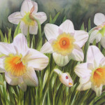 Daffodils For Newsletter
