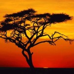 Tree Canvas Offer Handmade Reproduction Sunset