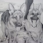 Graphite Sketch German Shepherds