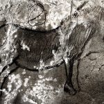 Horse Cave Paintings From The Niaux