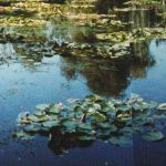 Monet Garden Giverny Reflections